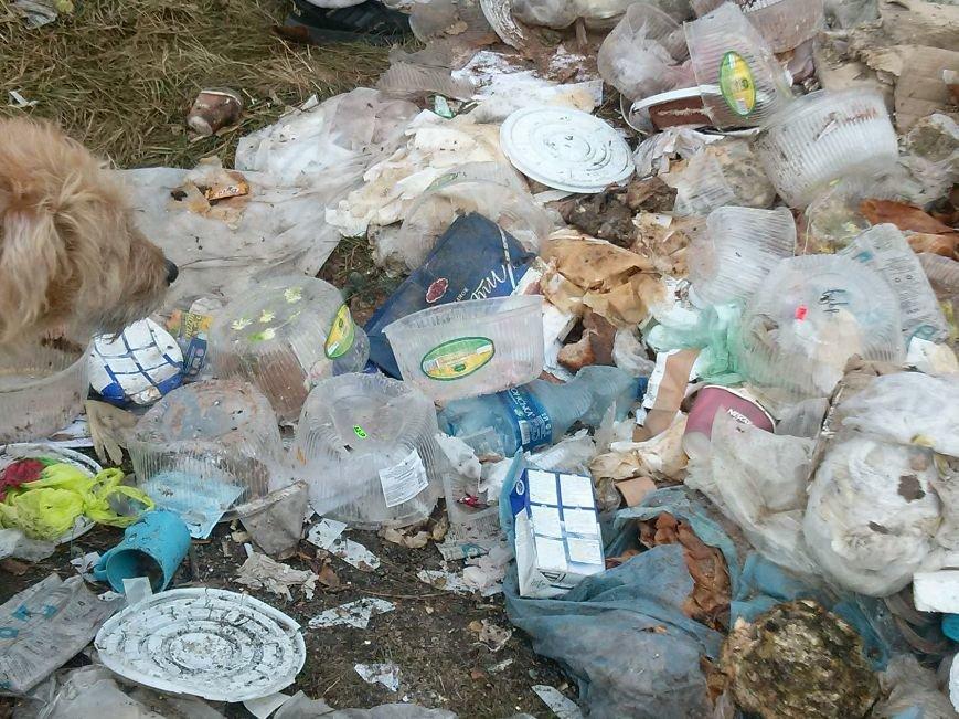 В Сумах неизвестные устроили стихийную свалку из «сладкого» мусора (ФОТО). ОБНОВЛЕНО, фото-4