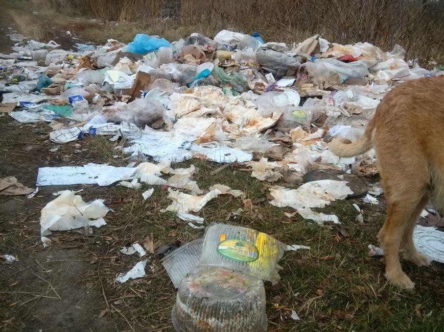 В Сумах неизвестные устроили стихийную свалку из «сладкого» мусора (ФОТО). ОБНОВЛЕНО, фото-3
