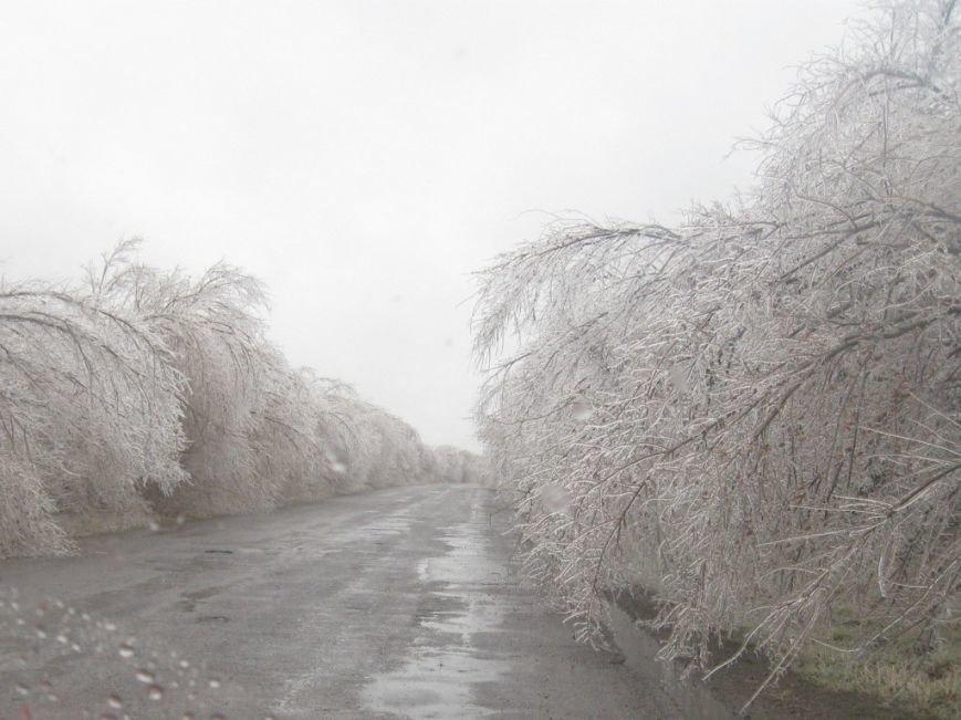 В Запорожской области обледеневшие деревья попадали на дороги (ФОТО), фото-1