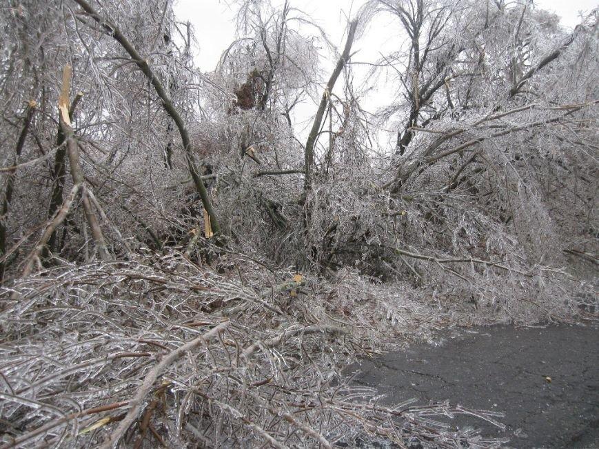 В Запорожской области обледеневшие деревья попадали на дороги (ФОТО), фото-3