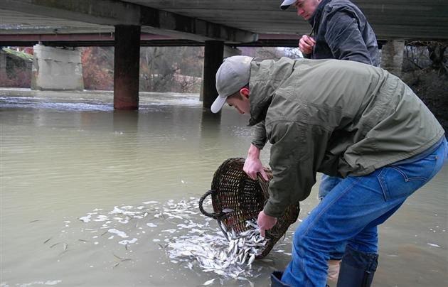 ФОТОФАКТ: этой осенью в водоемы Запорожской области выпустили 1,7 миллионов рыб (фото) - фото 1