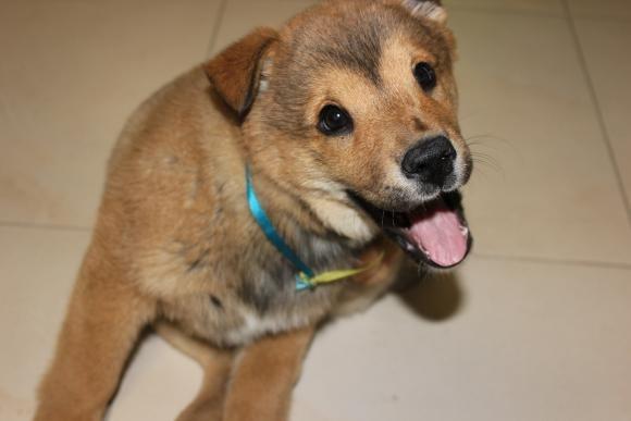 Був Сєпаром, а став Укропом: тернопільські волонтери привезли тримісячну собаку із зони АТО (фото) - фото 1