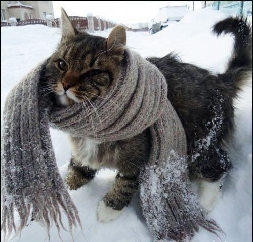 Как согреться в холодную пору… (фото) - фото 5
