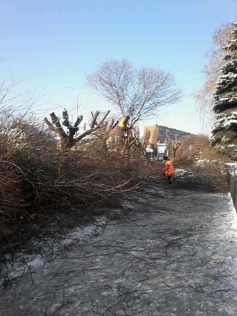 В Красноармейске на центральной улице проводится обрезка деревьев (фото) - фото 2