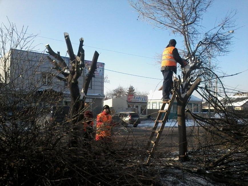 В Красноармейске на центральной улице проводится обрезка деревьев (фото) - фото 4