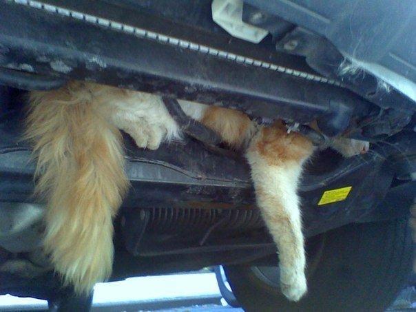 Запорожских автомобилистов просят быть внимательнее с котами (ФОТОПОДБОРКА), фото-6