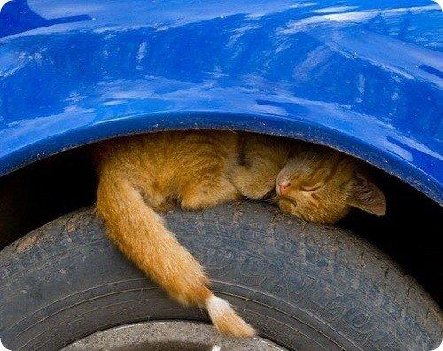 Запорожских автомобилистов просят быть внимательнее с котами (ФОТОПОДБОРКА), фото-3