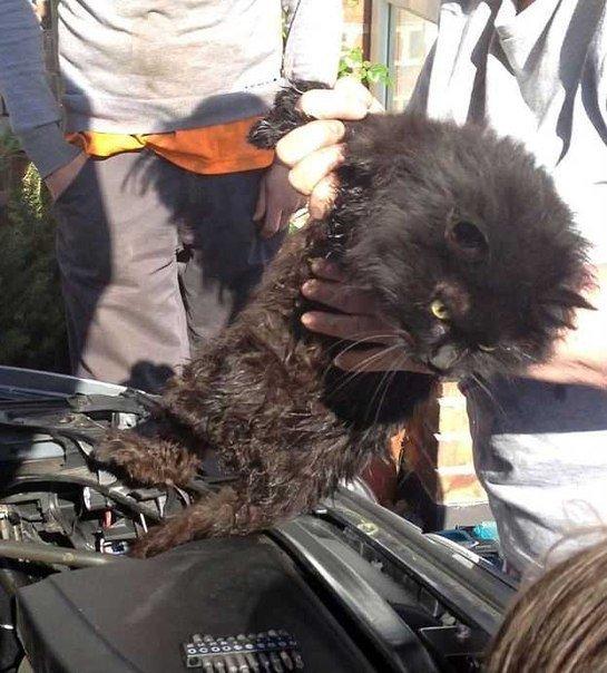 Запорожских автомобилистов просят быть внимательнее с котами (ФОТОПОДБОРКА), фото-1