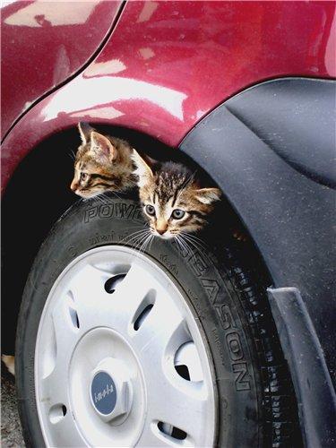 Запорожских автомобилистов просят быть внимательнее с котами (ФОТОПОДБОРКА), фото-5