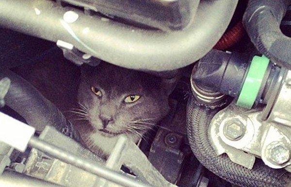 Запорожских автомобилистов просят быть внимательнее с котами (ФОТОПОДБОРКА), фото-4
