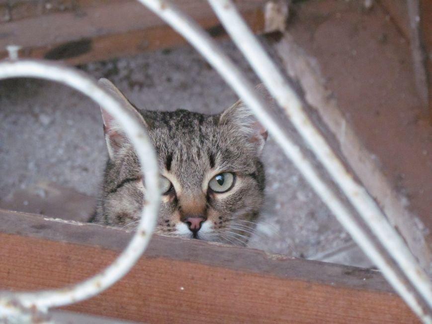 В Мариуполе элитный советский магазин превратился в «кошкин дом» (ФОТОФАКТ), фото-4