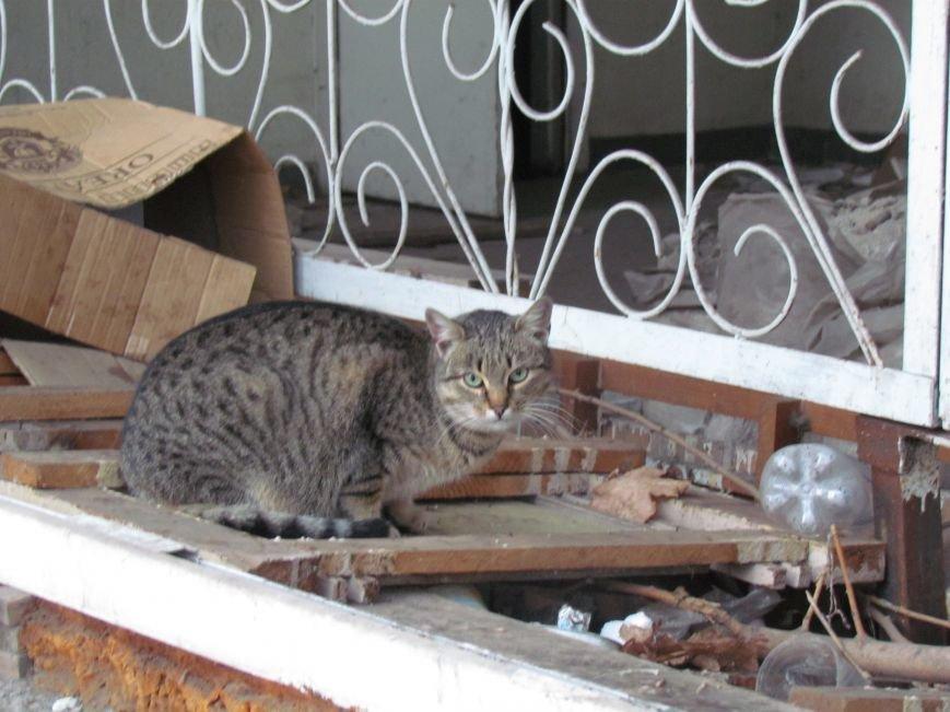 В Мариуполе элитный советский магазин превратился в «кошкин дом» (ФОТОФАКТ), фото-3