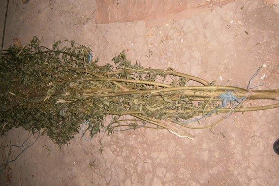 На Львівщині накрили контрабанду наркотиків за 120 тисяч гривень (ФОТОРЕПОРТАЖ) (фото) - фото 5