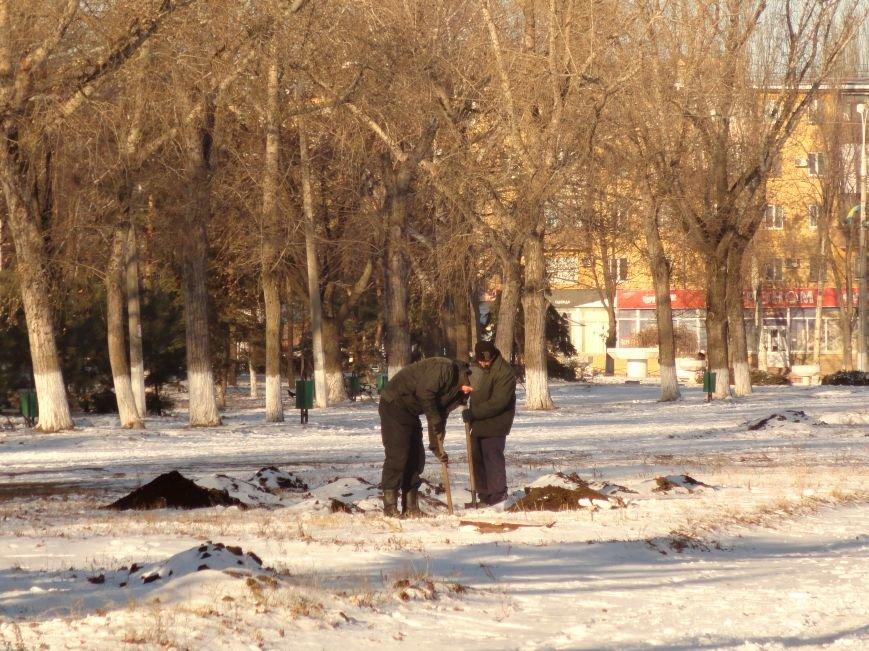 Зеленстрой подарит мариупольцам живые елки (ФОТОФАКТ) (фото) - фото 1
