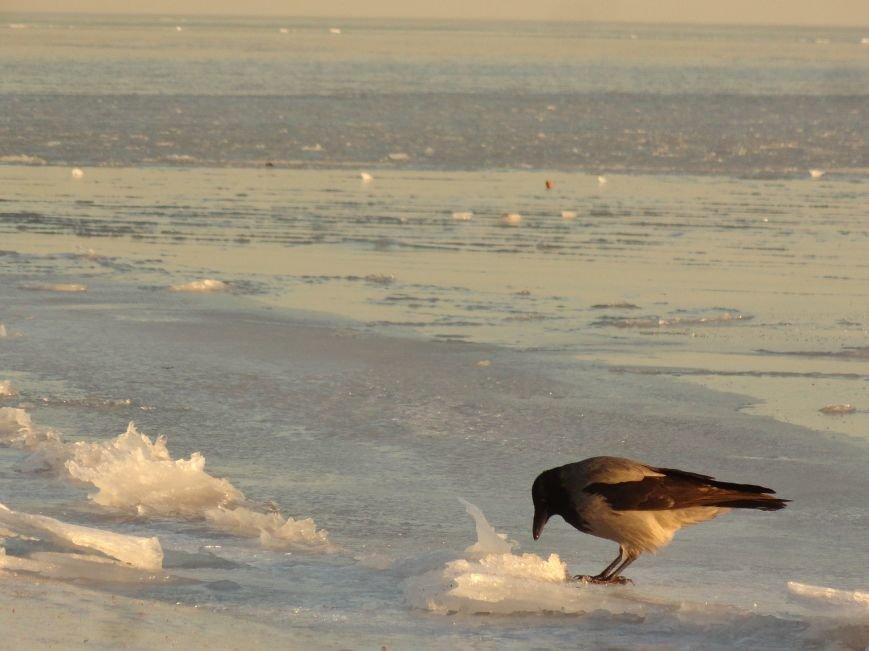 Фотопятница: «Всем влюбленным в наше море» (фото) - фото 12
