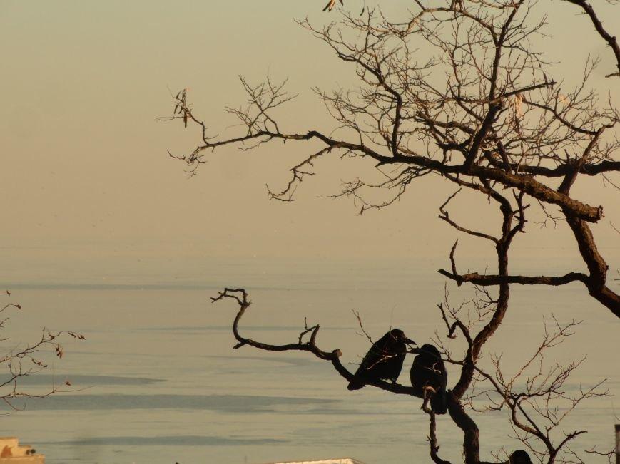 Фотопятница: «Всем влюбленным в наше море» (фото) - фото 21
