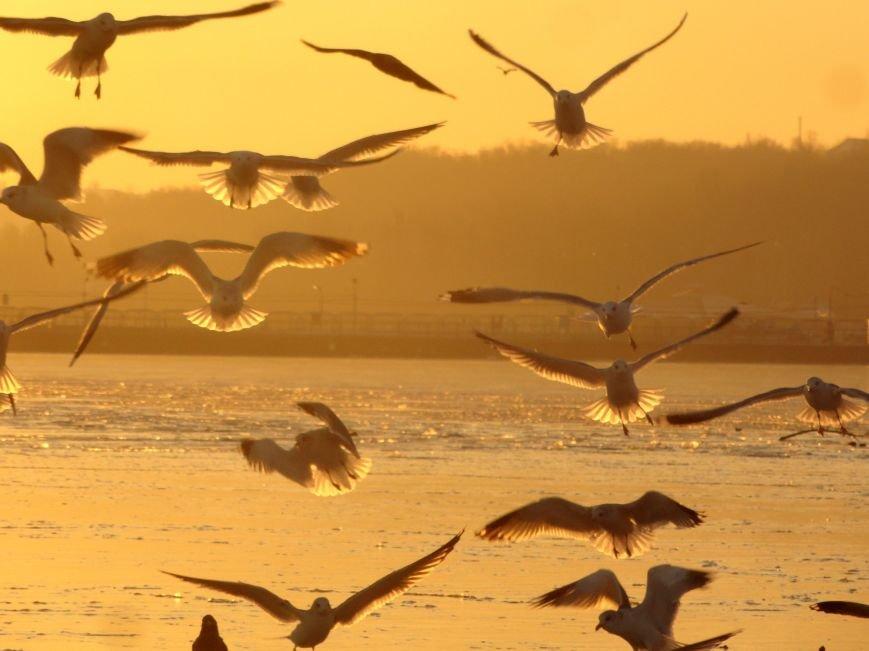 Фотопятница: «Всем влюбленным в наше море» (фото) - фото 17