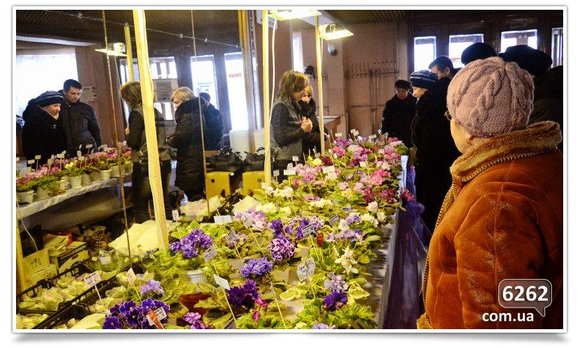 Зимняя выставка фиалок в Славянске (фото) - фото 3