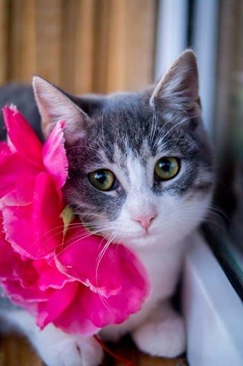 Раздел нашего сайта www.0552.ua «Ищу хозяина» помогает найти животным любимый дом! (фото) - фото 3