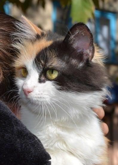 Раздел нашего сайта www.0552.ua «Ищу хозяина» помогает найти животным любимый дом! (фото) - фото 2