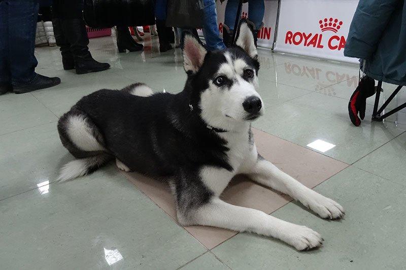 собаки (2)