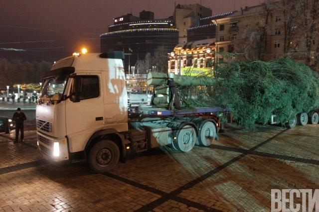 В столицу из Ивано-Франковска привезли главную елку страны (ФОТО) (фото) - фото 1