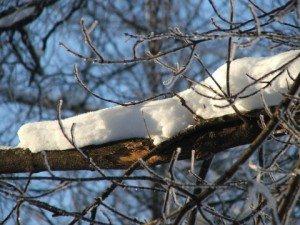 snow-on-tree-branch-dscf1006-480x360-300x225