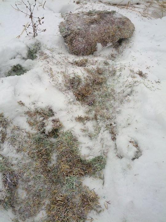 Немецкий журналист нашел в Донецке миллиард резаных гривен (ФОТО), фото-1