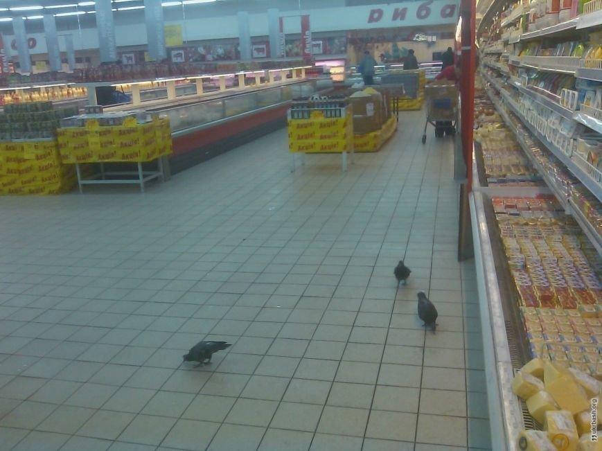 У Росії рудий кіт з'їв в магазині рибу на 20 тисяч гривень (ВІДЕО) (фото) - фото 1