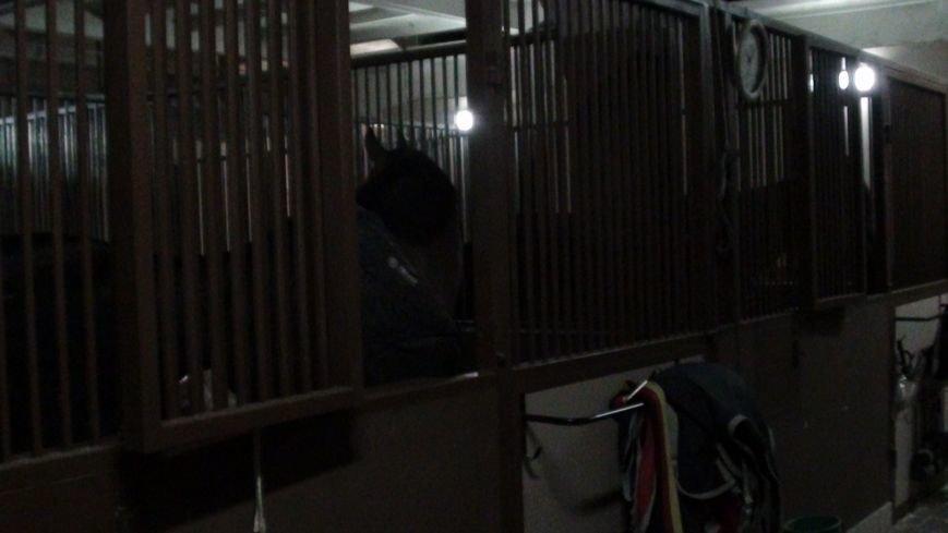 В Харькове бизнесмены прятали миллионы в конюшне, чтобы потом вывезти их заграницу (ФОТО) (фото) - фото 1