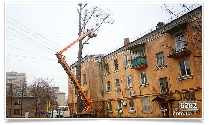 Идёт плановая обрезка деревьев(фотофакт) (фото) - фото 2