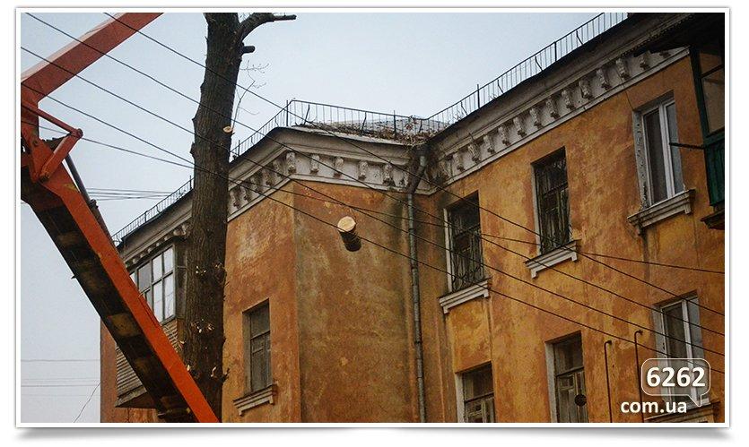 Идёт плановая обрезка деревьев(фотофакт) (фото) - фото 4