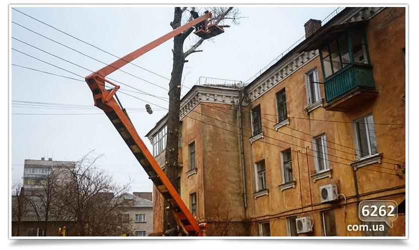 Идёт плановая обрезка деревьев(фотофакт) (фото) - фото 5