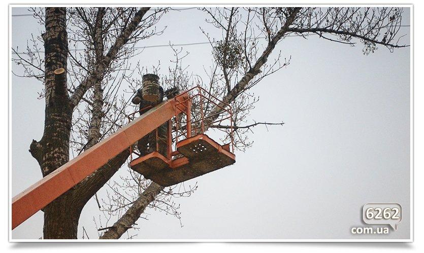 Идёт плановая обрезка деревьев(фотофакт) (фото) - фото 3