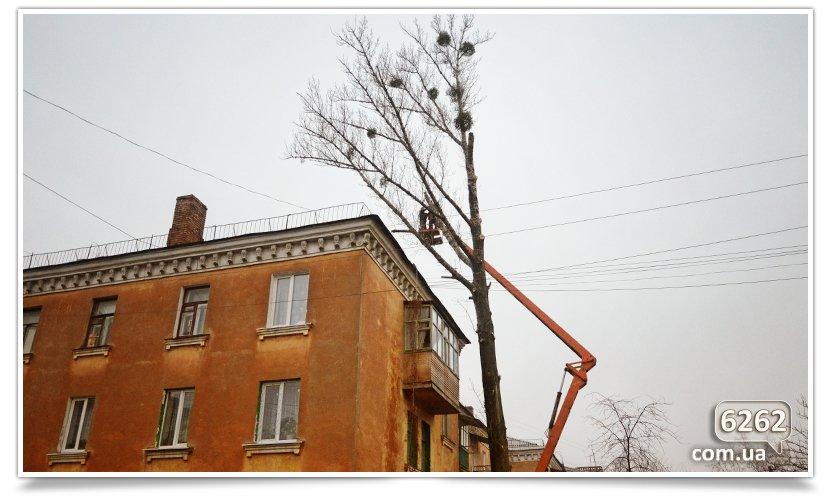 Идёт плановая обрезка деревьев(фотофакт) (фото) - фото 1