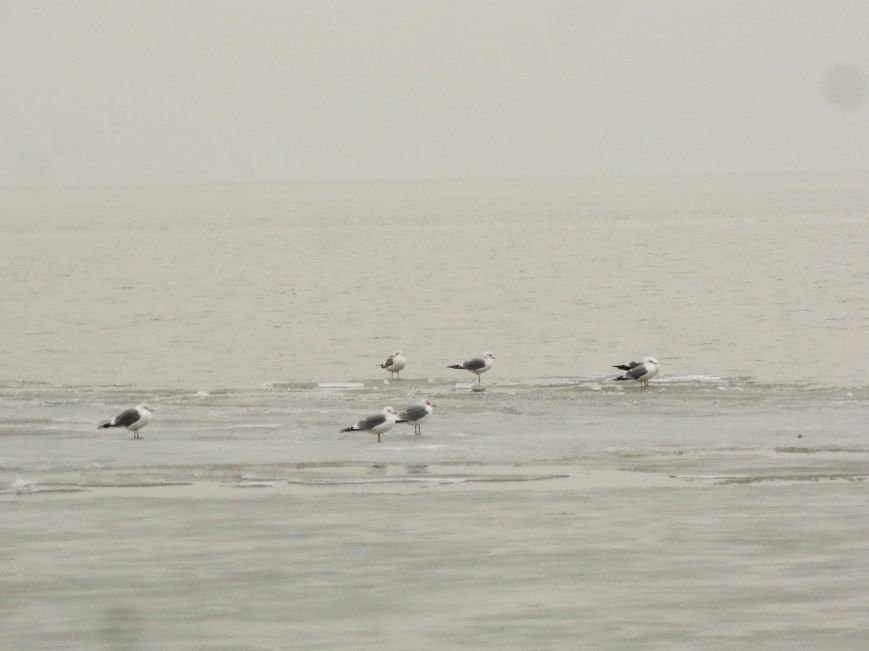 В Мариуполе на побережье ледоход (ФОТОФАКТ) (фото) - фото 1