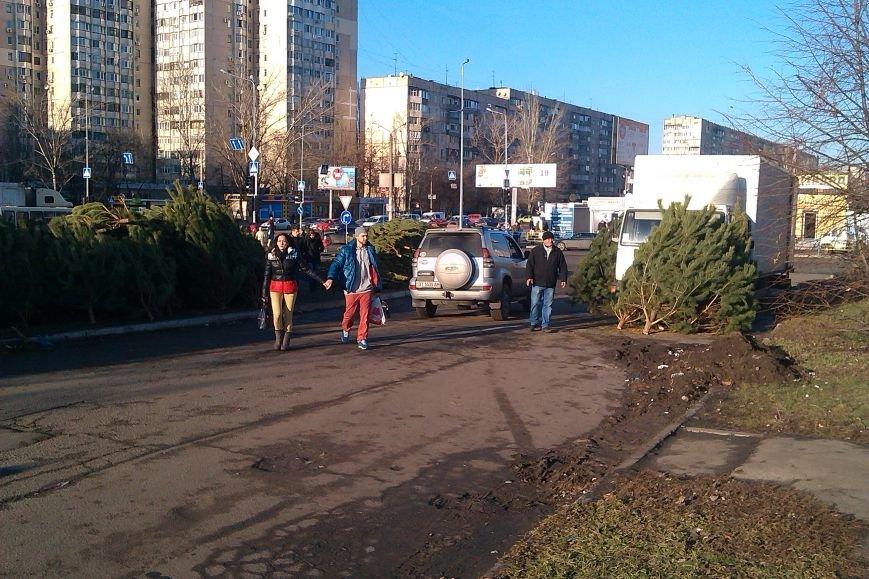 В Одессе появились первые елочные базары (ФОТО) (фото) - фото 1