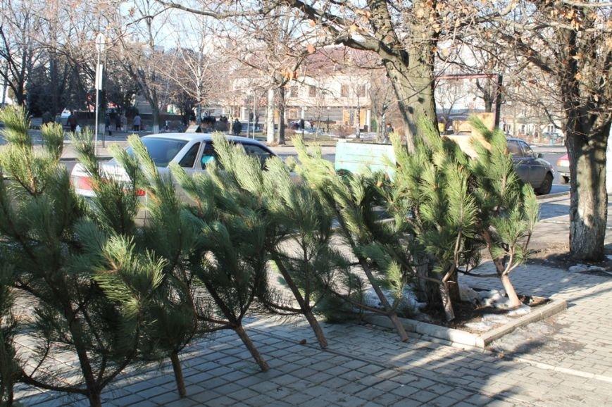 В Артемовске заработали елочные базары, фото-2