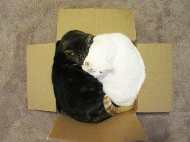 Коти vs ємності: муркотіння з глибин коробки, фото-7