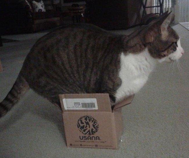 Коти vs ємності: муркотіння з глибин коробки, фото-11