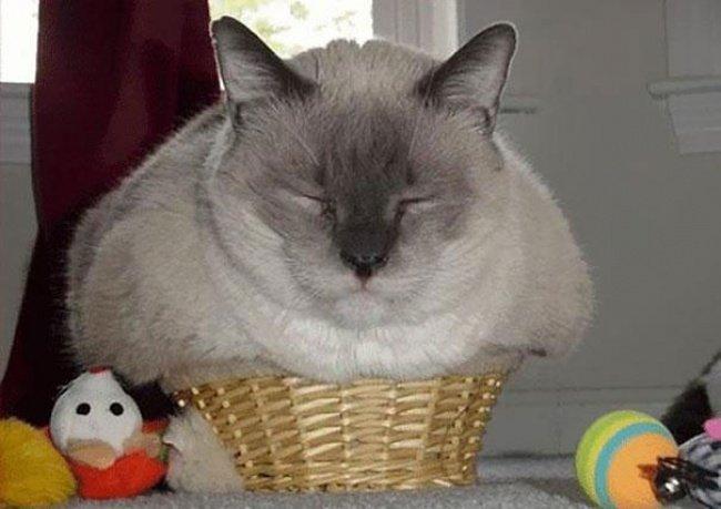 Коти vs ємності: муркотіння з глибин коробки, фото-2