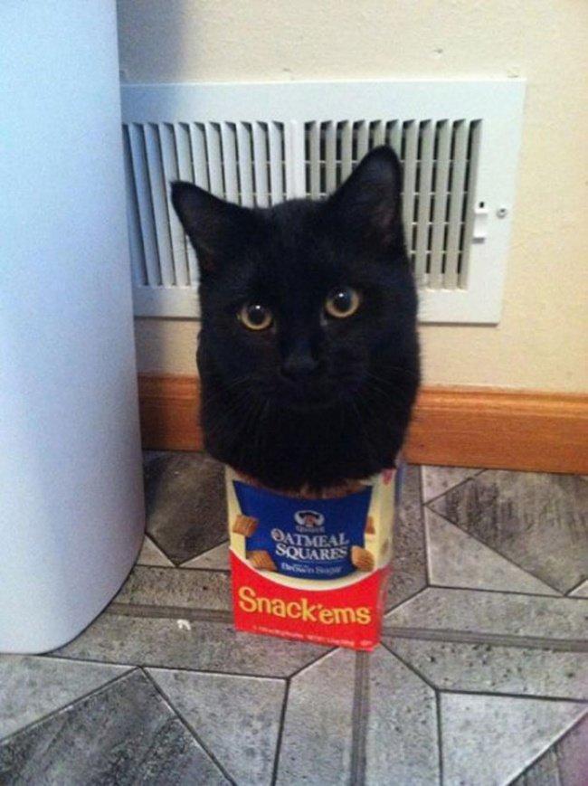 Коти vs ємності: муркотіння з глибин коробки, фото-13