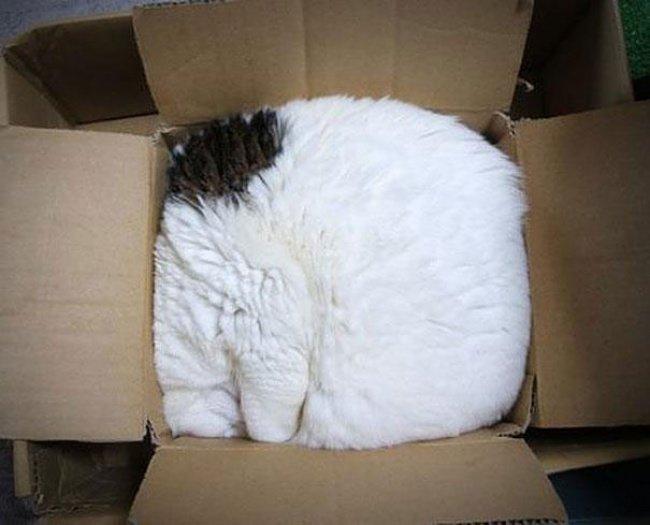 Коти vs ємності: муркотіння з глибин коробки, фото-5
