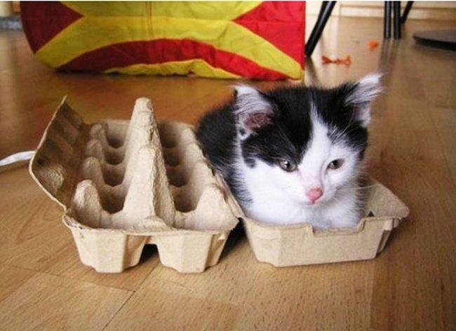 Коти vs ємності: муркотіння з глибин коробки, фото-14