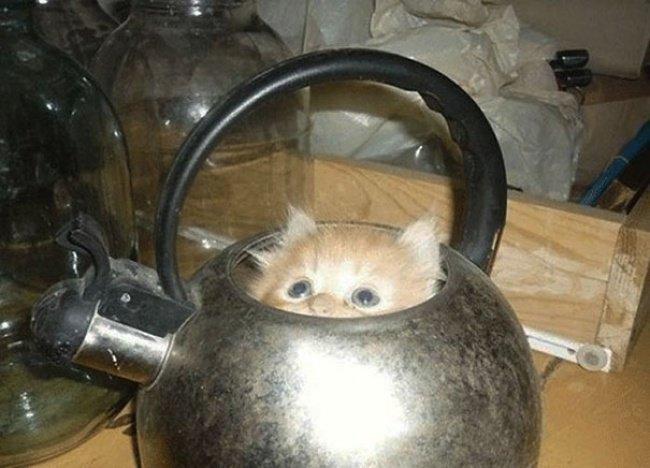Коти vs ємності: муркотіння з глибин коробки, фото-1