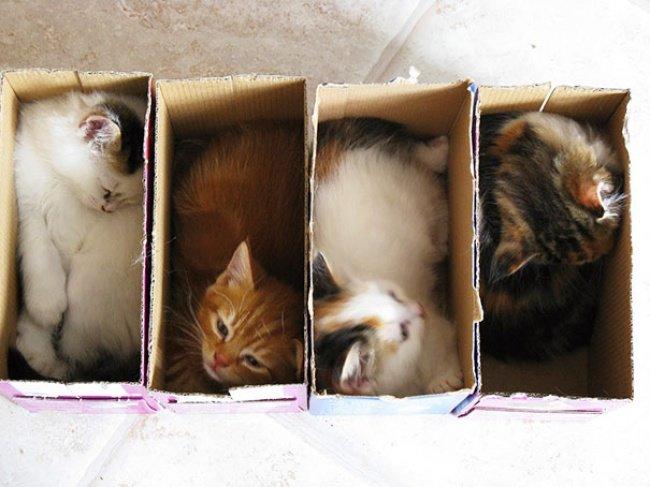 Коти vs ємності: муркотіння з глибин коробки, фото-8