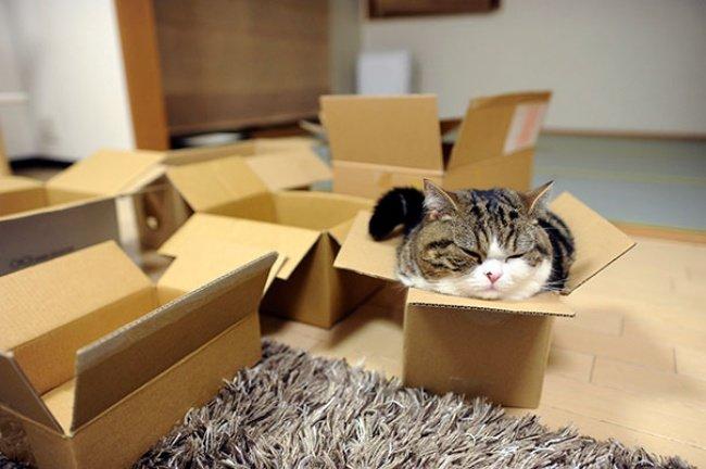 Коти vs ємності: муркотіння з глибин коробки, фото-15