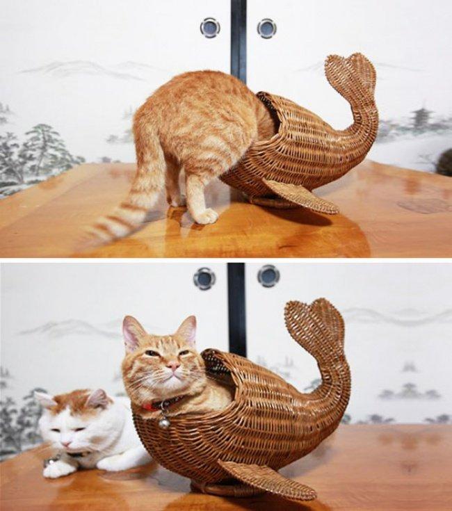 Коти vs ємності: муркотіння з глибин коробки, фото-9