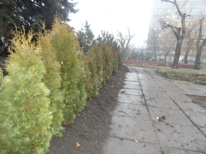 В центре Мариуполя выросла зеленая стена (ФОТОФАКТ) (фото) - фото 1