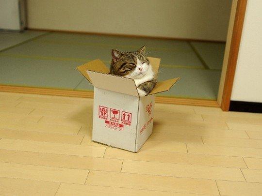 Коти vs ємності: муркотіння з глибин коробки (фото) - фото 4
